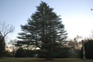 VCCA -- Tree